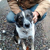 Adopt A Pet :: Raegann - Benton, PA