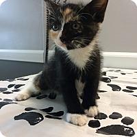 Adopt A Pet :: Jill - St. Louis, MO