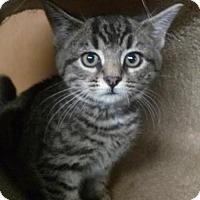 Adopt A Pet :: Benny (teenage male) - Harrisburg, PA