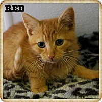 Adopt A Pet :: Red - Island Heights, NJ