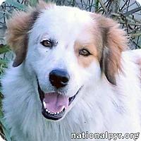 Adopt A Pet :: Jack in NY - pending - Beacon, NY