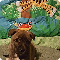 Adopt A Pet :: Peg - Albany, NC