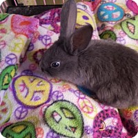 Adopt A Pet :: Ariel - Kenosha, WI