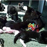 Adopt A Pet :: Kittens - Davis, CA