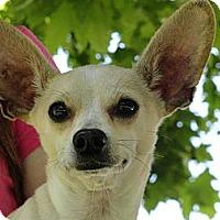 Adopt A Pet :: Lester - Poway, CA