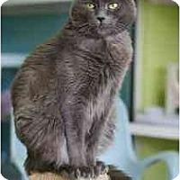 Adopt A Pet :: Springie - Marietta, GA