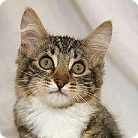 Adopt A Pet :: Jarvis V - Sacramento, CA