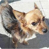 Adopt A Pet :: Javier - Meridian, ID