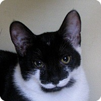 Adopt A Pet :: Belle - bloomfield, NJ