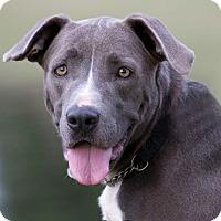 Adopt A Pet :: Luna - Broken Arrow, OK