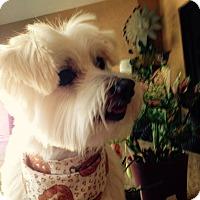 Adopt A Pet :: Tommy - North Port, FL
