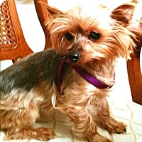 Adopt A Pet :: Pippie - Whiting, NJ