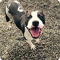 Adopt A Pet :: Tom Ford - Los Angeles, CA