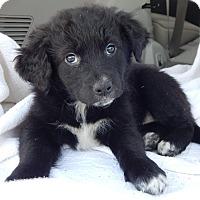 Adopt A Pet :: Breeze (6 lb) - SUSSEX, NJ