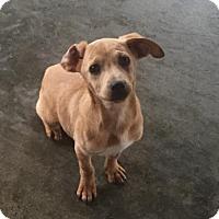 Adopt A Pet :: Jane - Spartanburg, SC