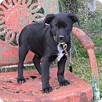 Adopt A Pet :: ASHER - Bedminster, NJ