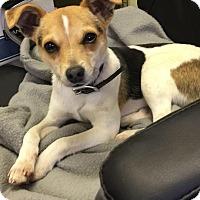 Adopt A Pet :: OSCAR - Cadiz, OH