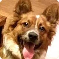 Adopt A Pet :: Auggie - Dallas, TX