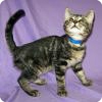 Adopt A Pet :: Fletcher - Powell, OH