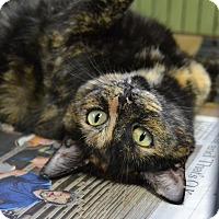 Adopt A Pet :: Honey - Brooklyn, NY