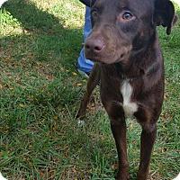 Adopt A Pet :: Diesel - Sparta, NJ
