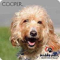 Adopt A Pet :: Cooper - No longer accepting applications - Council Bluffs, IA