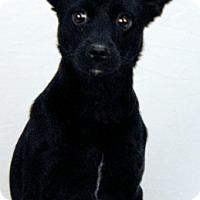 Adopt A Pet :: Dolly - Newland, NC