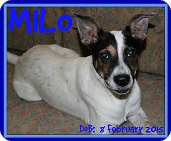 Terrier (Unknown Type, Medium) Mix Dog for adoption in Sebec, Maine - MILO