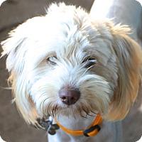 Adopt A Pet :: Allegra - Woonsocket, RI