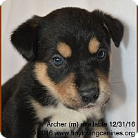 Adopt A Pet :: Archer - Simi Valley, CA