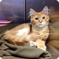 Adopt A Pet :: H-2 - Triadelphia, WV