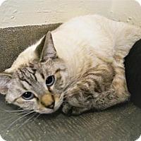 Adopt A Pet :: Serenity - Tempe, AZ