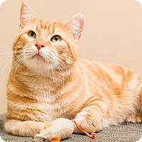 Adopt A Pet :: Orange Julius - Chicago, IL