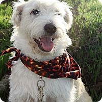 Adopt A Pet :: ARTHUR - Poway, CA