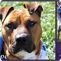 Adopt A Pet :: Penelope - Sylvania, OH