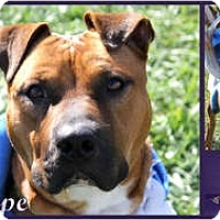 Adopt A Pet :: Penelope - Toledo, OH