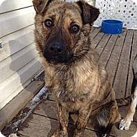 Adopt A Pet :: Marlow - Saskatoon, SK