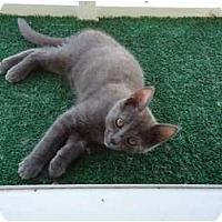 Adopt A Pet :: Grady - Glynda's son - Riverside, RI