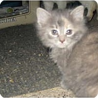 Adopt A Pet :: Lotti&LuLu - Clay, NY