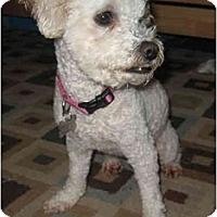 Adopt A Pet :: Cinnamon - La Costa, CA