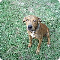 Adopt A Pet :: Sonny - Morriston, FL