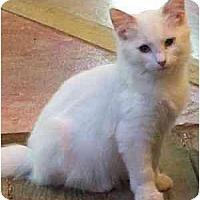 Adopt A Pet :: Ismene - Davis, CA