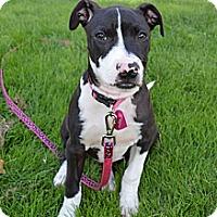 Adopt A Pet :: Sadie - La Habra, CA