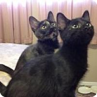 Adopt A Pet :: Lucky/Kaybee - Chandler, AZ