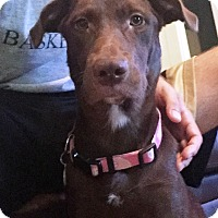 Adopt A Pet :: Amanda - Cumming, GA