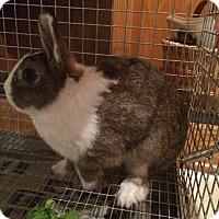 Adopt A Pet :: Mr. Dutch - Conshohocken, PA