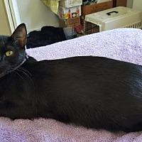 Adopt A Pet :: Luna - San Jose, CA