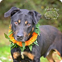 Adopt A Pet :: Mark - Fort Valley, GA