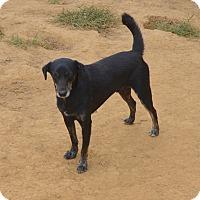 Adopt A Pet :: Karl - Groton, MA
