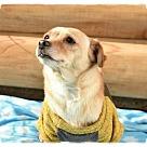 Adopt A Pet :: Snookie
